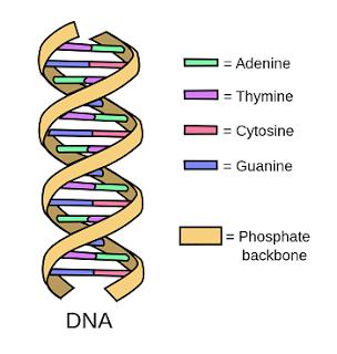 Penemu DNA ~ James Watson